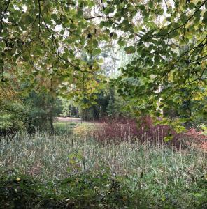 1200 gallery pond